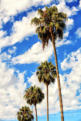 Photograph - Four Palm Trees In Beverly Hills by John Rizzuto