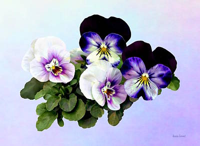 Photograph - Four Pansies by Susan Savad