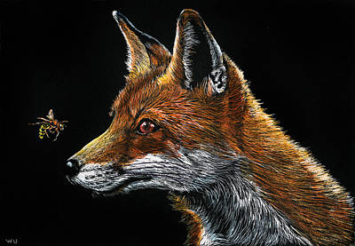 Drawing - Fox And Hornet by William Underwood