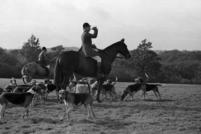 Photograph - Fox Hunting by Felix Man