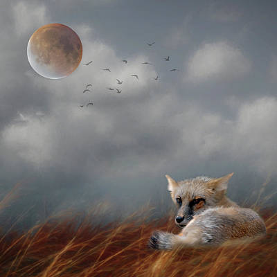 Photograph - Fox In Moonlight Square by Rebecca Cozart