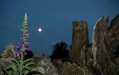 Photograph - Foxglove And Moon II by Helen Northcott