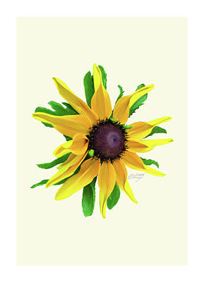 Photograph - Frameable Black-eyed Susan Notecard by Evelyn Odango