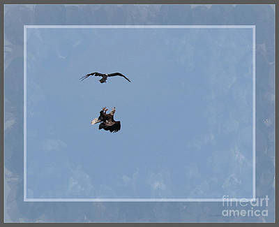 Photograph - Framed Fighting Eagle And Osprey by Sandra Huston