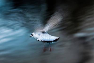 Photograph -  Free As A Bird by Christine Sponchia