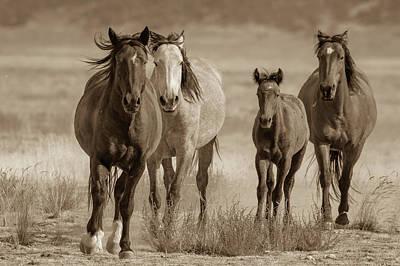 Photograph - Free Family by Mary Hone