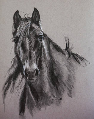 Impressionism Drawings - Free Spirit by Roberta Murray