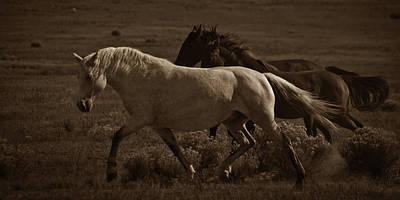 Photograph - Freedom II by Catherine Sobredo