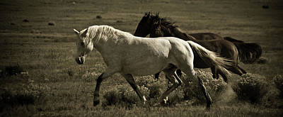 Photograph - Freedom 3 by Catherine Sobredo