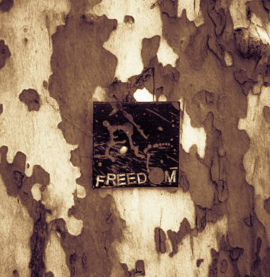 Photograph - Freedom by Traci Asaurus