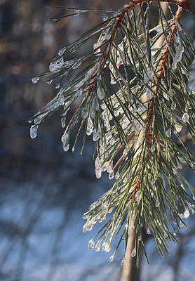 Photograph - Freezing Rain Decoration by David T Wilkinson