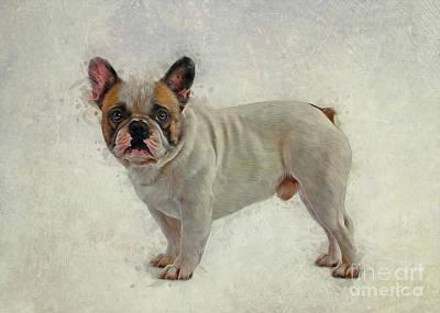 Animals Drawings - French Bulldog by Ian Mitchell