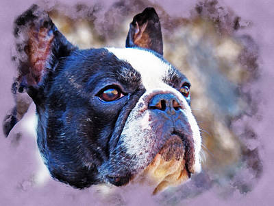 Watercolor Pet Portraits Photograph - French Bulldog In Watercolor by Robert Kinser