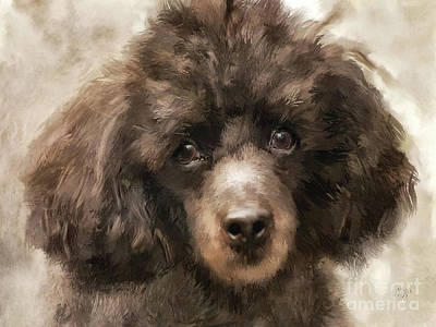 Digital Art - French Poodle by Lois Bryan