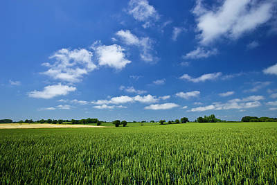 Green Color Photograph - Fresh Air. Blue Skies Over Green Wheat by Alvinburrows