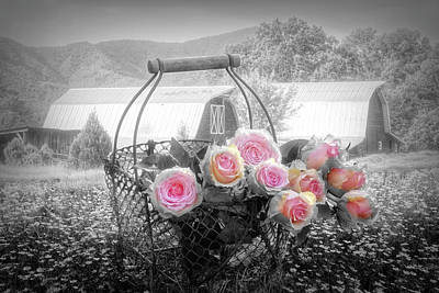 Photograph - Fresh From The Farm Black And White Color Selected Pink by Debra and Dave Vanderlaan