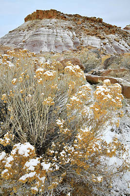 Photograph - Fresh Snow On Rabbit Brush And Bentonite Dunes by Ray Mathis