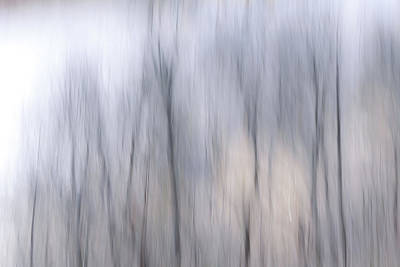 Photograph - Friday's Trees by Davin McLaird