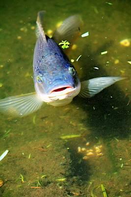 Movie Tees - Friendly Fish by Vicki Dreher