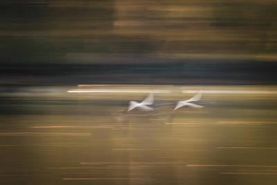 Photograph - Friends by Dalibor Hanzal