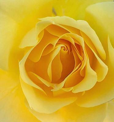 Photograph - Friendship Rose by Steph Gabler