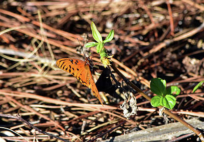 Photograph - Fritillary Near The Ground by William Tasker