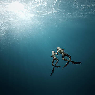 Photograph - Frog Couple Swimming Together by Maarten Wouters