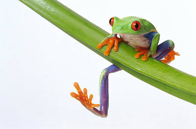 Photograph - Frog On Branch by Gk Hart/vikki Hart