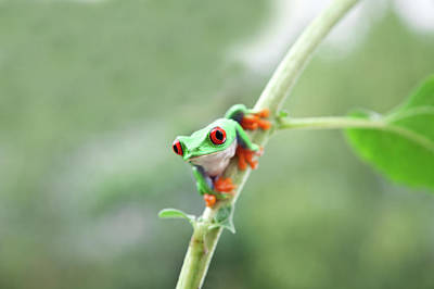 Photograph - Frog On Stem In Nature by Kerstin Klaassen
