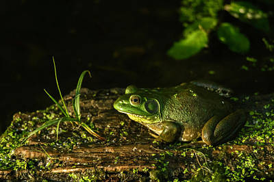 Photograph - Frog Party by Edward Peterson