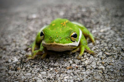 Photograph - Frogger by Vincent Autenrieb