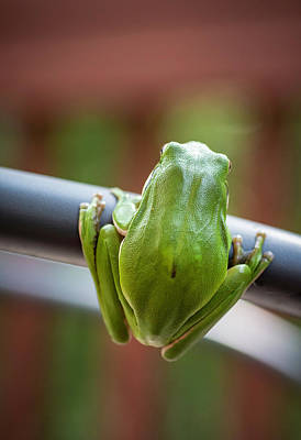 Photograph - Froggy Perspective by Keith Smith