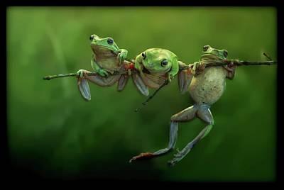 Photograph - Frogs by Dawn Van Doorn