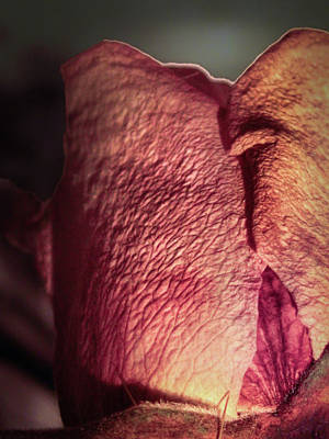 Photograph - From Series Ageing Of The Skin 5 by Juan Contreras