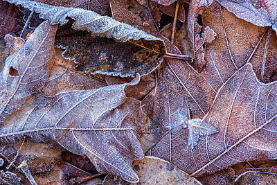 Photograph - Frost On Fallen Leaves by Belinda Greb