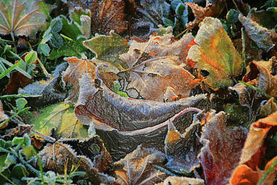 Photograph - Frost On Leaves by Karen Silvestri