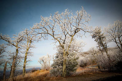 Photograph - Frost On The Mountain by Mark Duehmig
