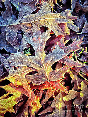 Photograph - Frosted Leaves by Kerri Farley