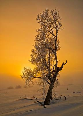 Photograph - Frosted Tree by Tom Gresham