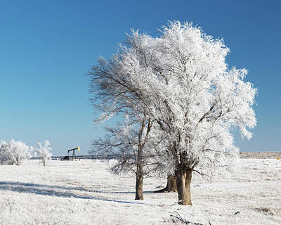 Photograph - Frosted Trees 01 by Rob Graham