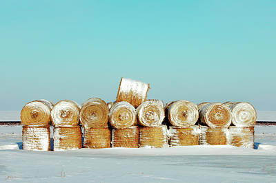 Photograph - Frosted Wheats by Todd Klassy