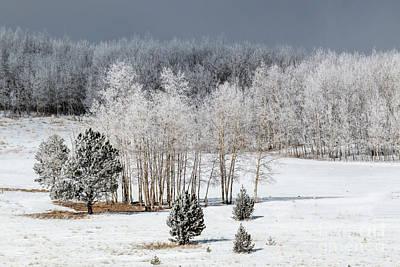 Photograph - Frosty Colorado Forest by Steve Krull