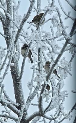 Photograph - Frosty House Sparrows by Ann E Robson