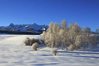 Royalty-Free and Rights-Managed Images - Frosty Trees on the Divide by Bridget Calip