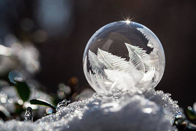 Photograph - Frozen Bubble by Jessica Nelson