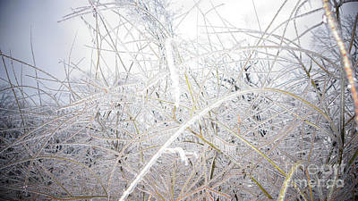 Photograph - Frozen by Cj Mainor