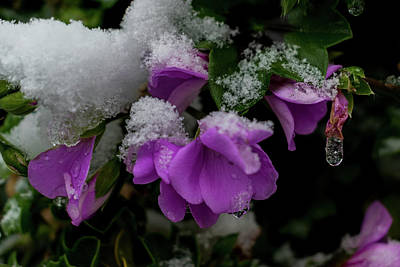 Photograph - Frozen Flowers by Mila Vasileva