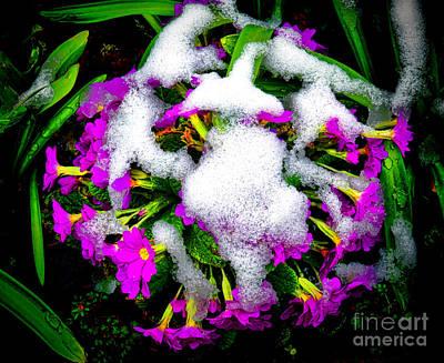 Photograph - Frozen Flowers by Olivier Le Queinec