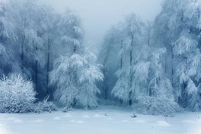 Mountain Royalty-Free and Rights-Managed Images - Frozen Forest by Evgeni Dinev