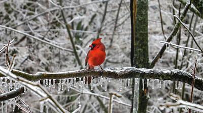 Digital Art - Frozen In Red by Becky Bunting